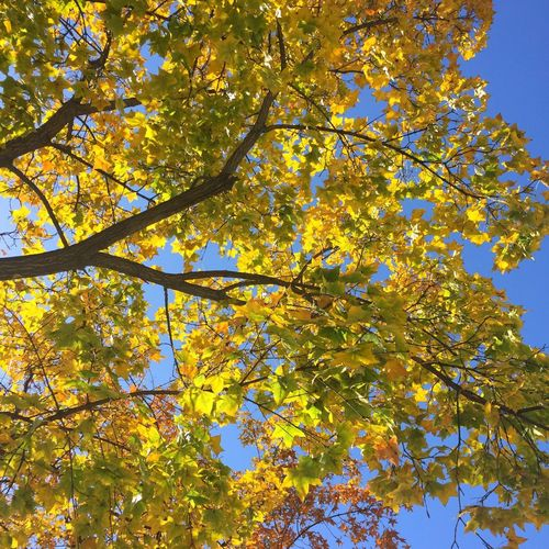 Tree Plant Low Angle View Beauty In Nature Branch Growth Sky