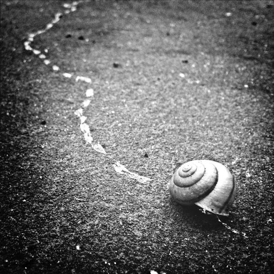 Nature Nature_collection NEM Black&white Good Things Come In Small Packages With Lightcase Snail Snail🐌 End Of The Line End Of The Road Drought Tired Give Up Quit Landsnail