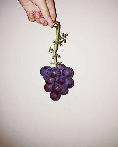 Grape 🍇 Grape Human Hand Hand Human Body Part One Person Real People Holding Indoors