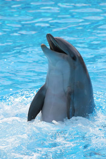 Animal Fin Animal Themes Animal Wildlife Animals In The Wild Aquarium Aquatic Mammal Beauty In Nature Blue Close-up Dauphin Day Dolphin Mammal Nature No People One Animal Outdoors Sea Sea Life Swimming UnderSea Underwater Water