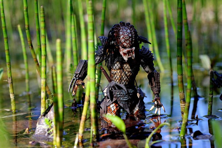 Predator on the hunt. Wading through the swamp. Stalking his prey. Hobbyphotography Toycommunity Toyphotography Figlife Necatoys Neca Action Figures Nature Forest Photography Woods Foliage, Vegetation, Plants, Green, Leaves, Leafage, Undergrowth, Underbrush, Plant Life, Flora