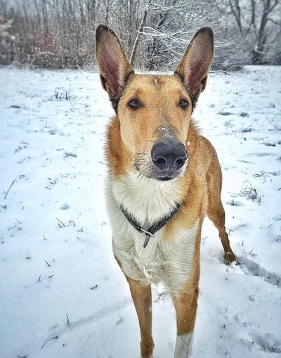 sheldon ❤ Smoothcollie Betteroutside Dog Pets Cold Temperature Portrait Winter Nature Outdoors