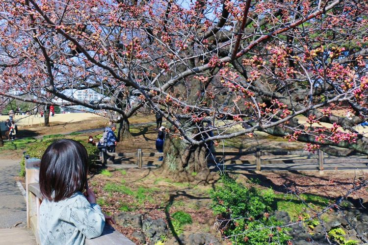 EyeEm Tokyo MeetUp 12 Hello My Baby Portrait EyeEm Porto Spring Vscocam VSCO EyeEm Nature Lover Taking Photos Urban Spring Fever Sakura Sakura2016 Cherry Blossoms