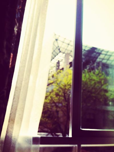 Spring is coming..outside window First Eyeem Photo