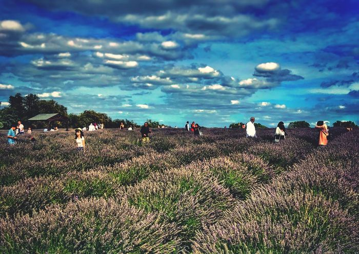 Nature Beauty In Nature Real People Sky Field Men Outdoors Tranquility Scenics Day Landscape Large Group Of People Lavender Field Grass Rural Scene Water Mammal People