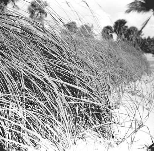 """Franka Solida IIIe with Y2 yellow filter Acros 100 (EI100) Rodinal 1:50 (@75F) 11 minutes (1 minute continuous """"wine swills"""" + 3"""" every 2 minutes) Filmcamera Analogue Photography B&w Rodinal Acros100 Franka Analog"""