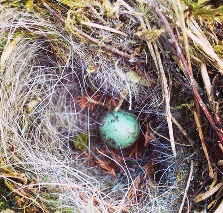 Nest Birds Egg Bird Eggs Scotland Eye Em Nature Lover Hello World