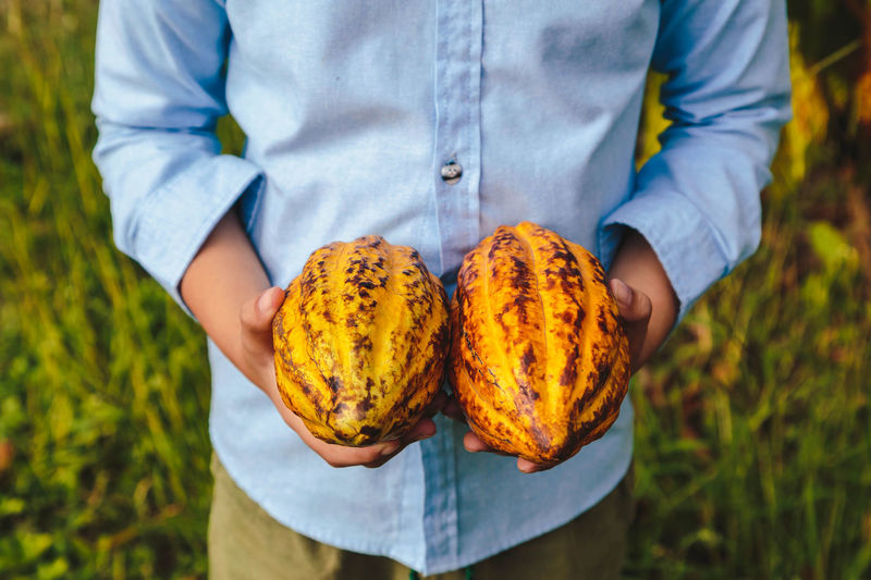 Midsection of man holding cacao fruits