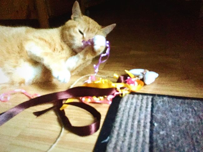 Cat Love It Domestic Cat Katzenleben Cat Collection Ginger Cat Cat 3XPSUnity EmNewHere Katzen 💜 Playing Cat Cat Toy Low Section Close-up Cat Posing Creation By Me Katze Cat Lovers 🐱💞 Katzenpfote Cat♡