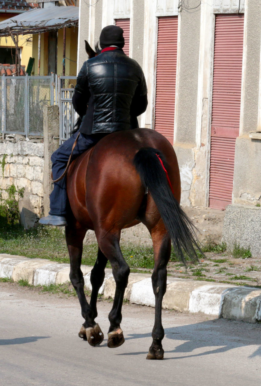 Rear View Of Horseman On Street