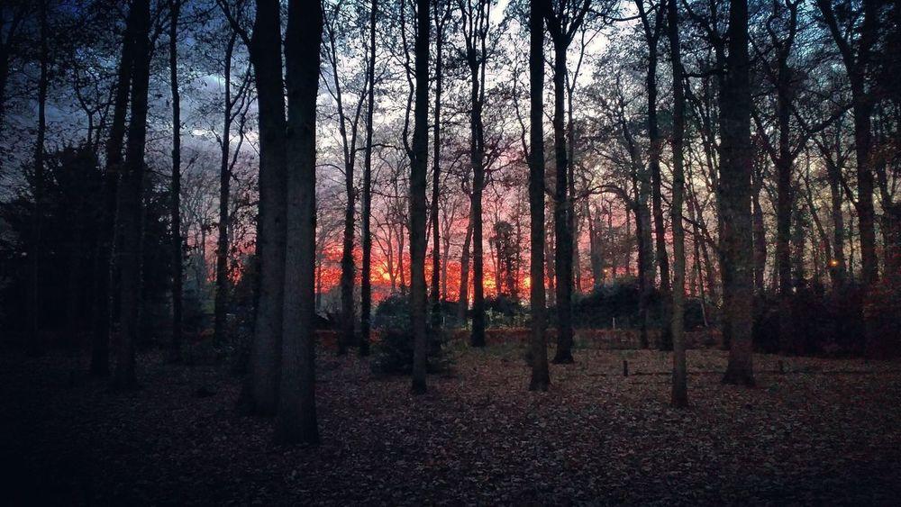 Dark Tree Outdoors Nature No People Landscape Sky Woods Trees Sunset Sun Evening Sky Fire In The Sky Dutch Landscape Veluwe Bennekom