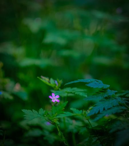 The lonley flower... EyeEm Gallery EyeEm Selects EyeEm Best Shots Beauty In Nature EyeEm Nature Lover Fujifilm X-T20 56mm F1.2 Flower Flowering Plant Plant Freshness Vulnerability  Beauty In Nature Fragility Nature Focus On Foreground