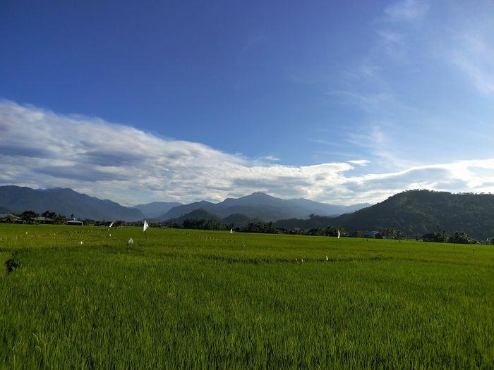 lubuak anau Lubuak Anau Tea Crop Mountain Irrigation Equipment Rural Scene Agriculture Field Sky Landscape Mountain Range Cloud - Sky