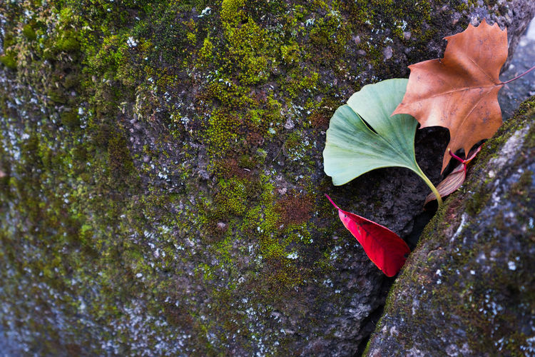 High angle view of leaves on rock
