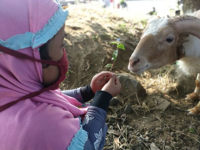 A child is sitting feeding a goat bandung west java indonesia