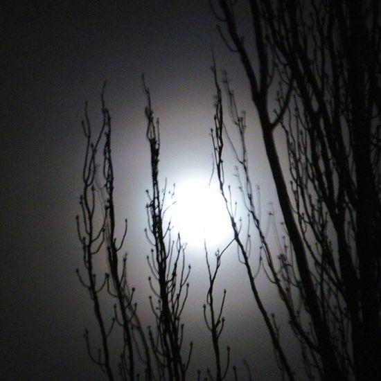 Halo Lunar tras las ramas. Lunalunera Skylovers Moon Zaragoza igerszgz