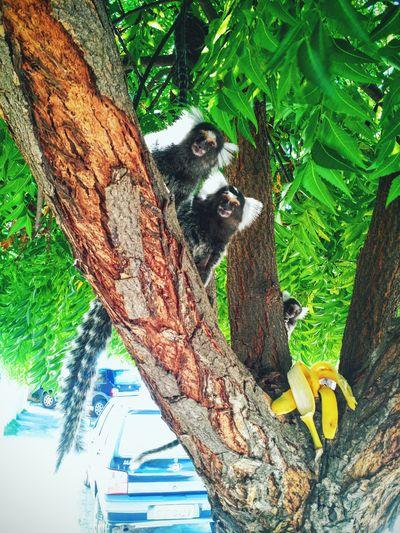 Urban Streetphotography Brazil Curiosity Nature_collection Nature Urban Nature Animal Instincts Aniamls