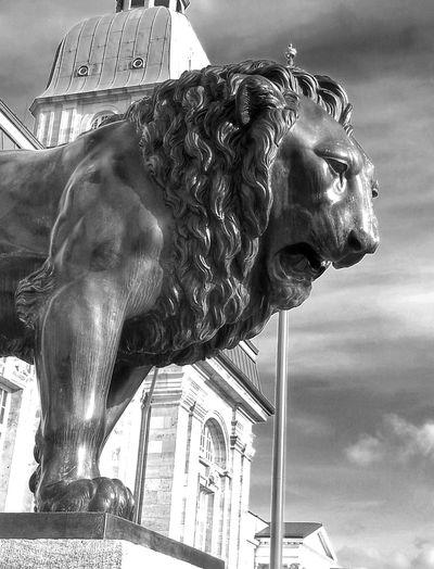 Darmstadt Landesmuseum Lion Statue Monochrome
