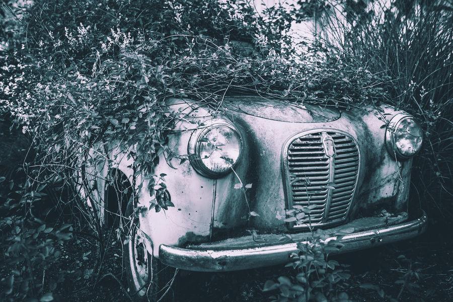 Car Cars Classic Cars EyeEm Best Shots Fugacity Outdoors Stationary Vintage Cars