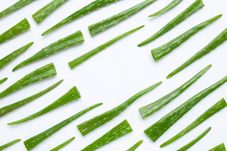 Aloe vera is a