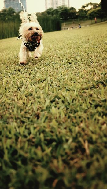 Feeling so happy when i can run on the meadow Ocha Happy Running Lovely Energetic