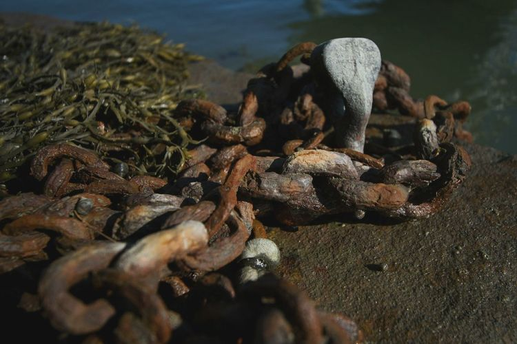 Rusted chains on the dock of the bay No People Outdoors Close-up Rusted Chain Man And Nature Water Man Made Object On The Bay Dock Of The Bay Summer Days Snails Animals And Man Sea Life Nature And Human