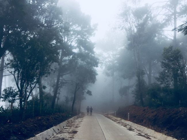 Mist And Wild Mist And Fog Mist Fog Morning Wild Mist Tree Plant The Way Forward Transportation Road Nature Direction Fog Beauty In Nature Diminishing Perspective Outdoors Street Walking Winter
