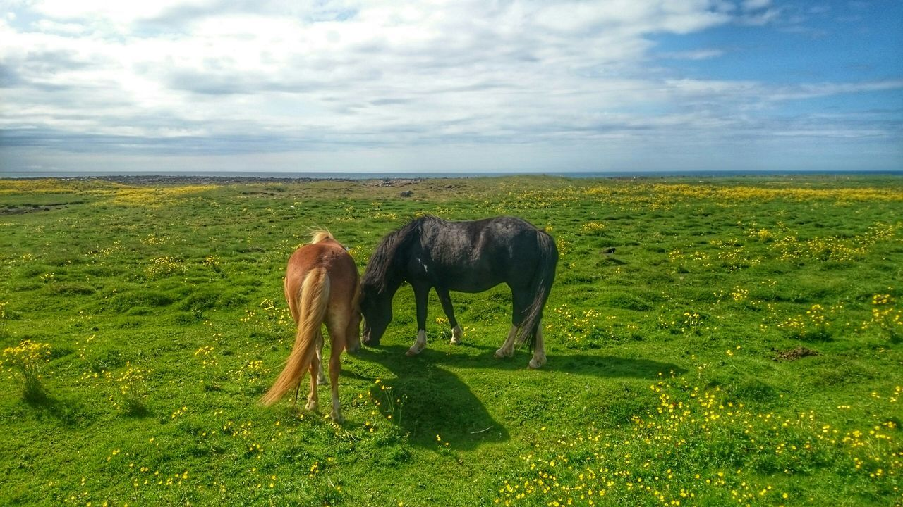 Horses Grazing On Grassy Field Against Cloudy Sky
