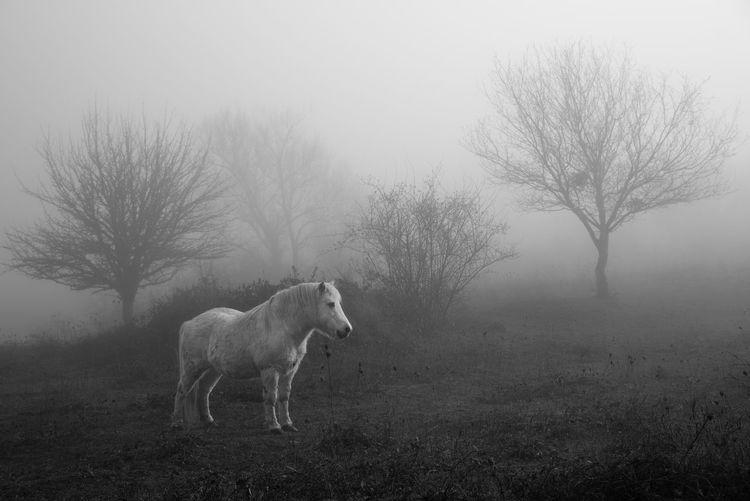 Pony standing on landscape