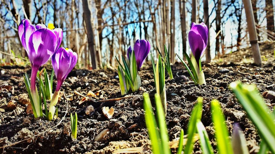 Well Hello Spring...it's so very Nice to See you again! Blooming Flower Collection First Blooms Of The Year Urban Nature EyeEm Nature Lover Nature Photography Flowerporn Beauty In Nature Visualsoflife Rebirth Earthporn No People My Favorite Place Showcase March Hugging A Tree EyeEm Masterclass Outdoor Photography Trees Collection Community Garden Quiet Moments Share Your Adventure