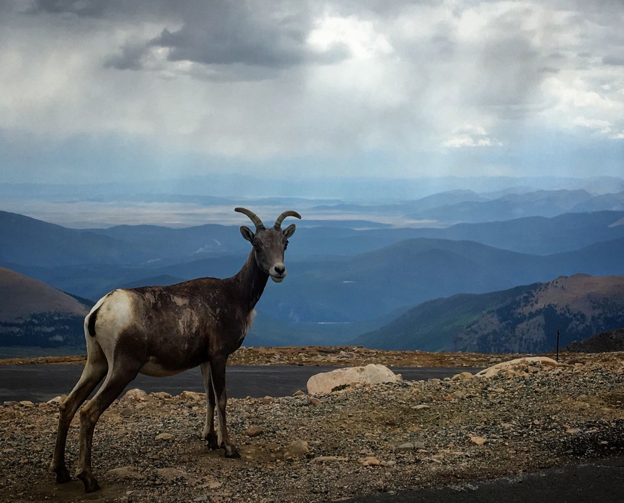 mountain, sky, cloud - sky, animal, animal themes, beauty in nature, mammal, environment, scenics - nature, nature, vertebrate, mountain range, standing, day, no people, one animal, landscape, domestic animals, animal wildlife, tranquil scene, outdoors, herbivorous