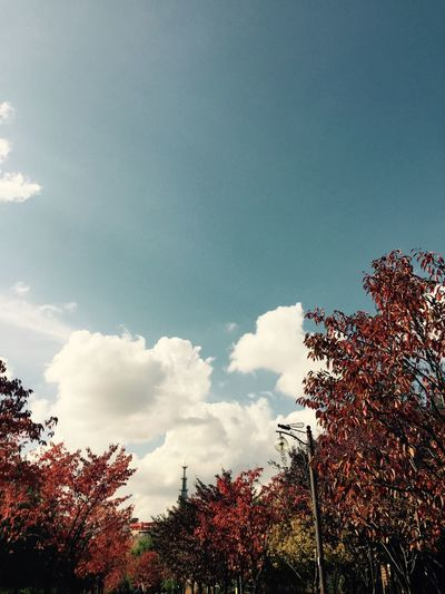 Sky Cloud - Sky Low Angle View Plant Tree Nature Beauty In Nature No People Blue Autumn Mood
