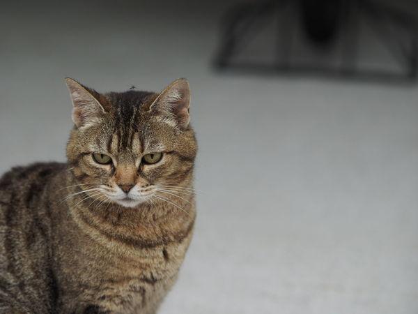 猫を撮りたいと思って谷中まで行ったのに、全く猫を撮れなかった。家に帰ったら直ぐ側に野良猫が(笑)。キリッとした顔の上には蚊がとまってます(笑)。          Taking Photos Taking Pictures Streetview Streetphotography Cat Stray Cat Cats Of EyeEm Cat Watching Cat Photography