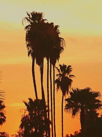 43 Golden Moments Fine Art Photography Sunsets For Hire!! The Essence Of Summer CHWYLWY