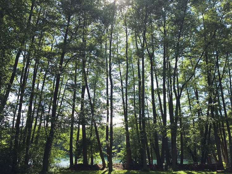 Nature Landscape Lake Tree Trees Green Forest Liepnitzsee Berlin Breathing Space