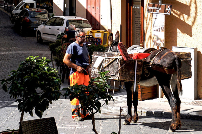 scavenger with muli in Palermo, Italy Mode Of Transportation Transportation Real People Street Streetphotography Street Photography Palermo Scavenger Street Cleaner Mule
