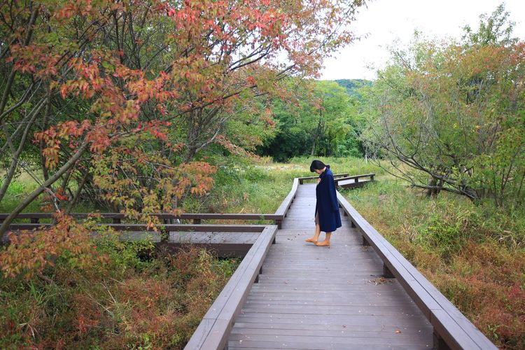 Side view of woman standing on boardwalk amidst trees in forest
