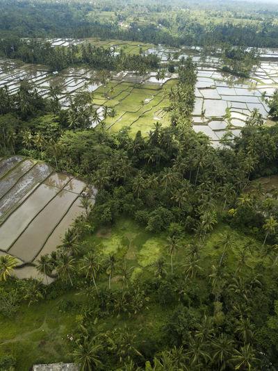 High angle view of lake along plants