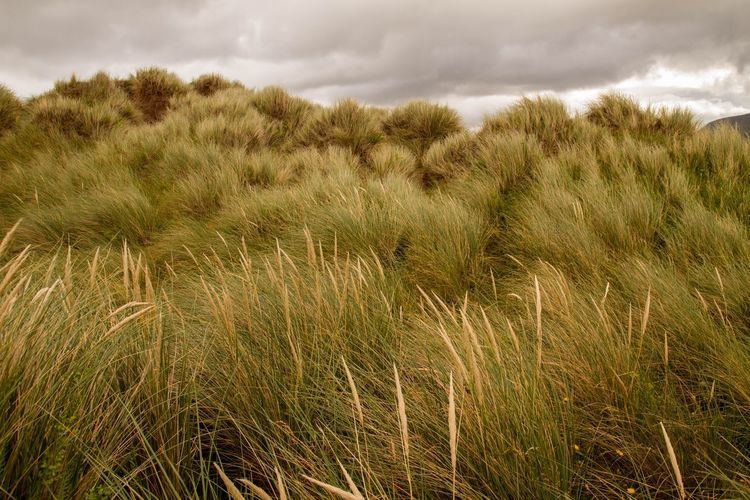 The Great Outdoors - 2017 EyeEm Awards Outdoors Beauty In Nature Tranquility Tranquil Scene Grass No People Plant Marram Grass Sand Dune Landscape Growth Sky Day Northern Ireland