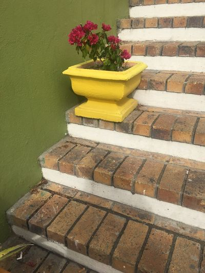 Flower Yellow No People Day Nature Growth Architecture Fragility Outdoors Beauty In Nature Freshness Stairs Bo-kaap