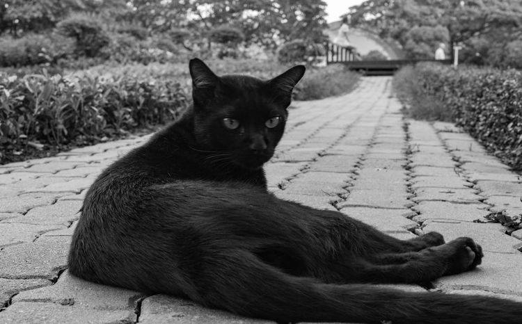 A cat Cat The Great Outdoors - 2016 EyeEm Awards EyeEm Gallery EyeEm Best Shots Shadows & Lights Shadow And Light Light And Shadow Black And White Black & White B&w