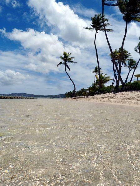 Palmtrees VirginIslands Beach Ocean Stcroix Caribbean RePicture Travel