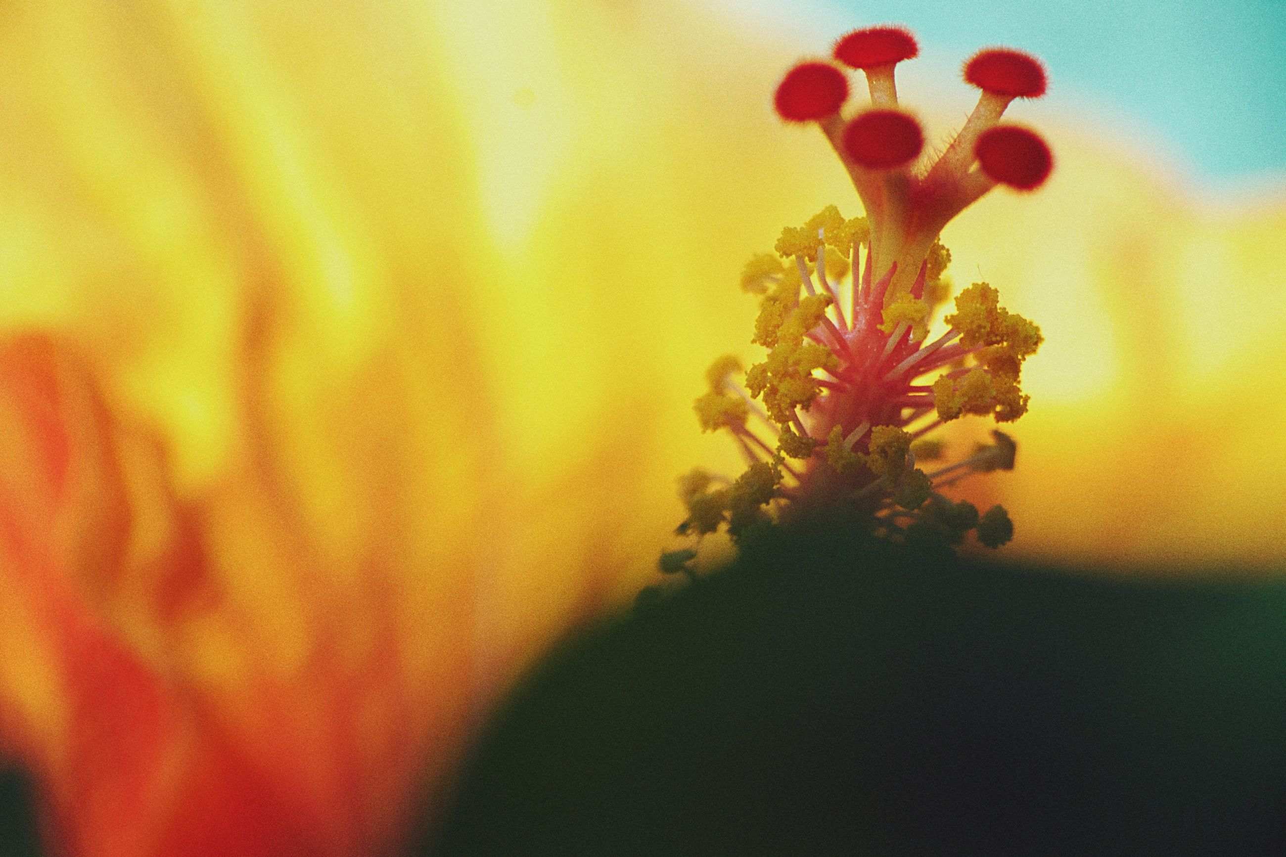flower, nature, growth, beauty in nature, close-up, no people, fragility, plant, day, indoors, freshness, flower head, sky