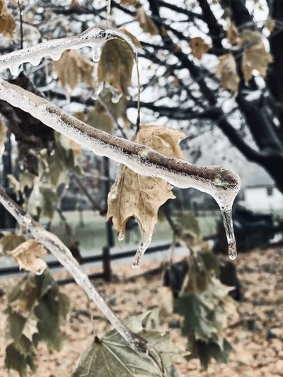 No People Nature Focus On Foreground Day Leaf Tree Plant Part Plant Close-up Sunlight Branch Winter Beauty In Nature Outdoors Cold Temperature The Great Outdoors - 2019 EyeEm Awards