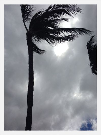 Prelude To The Hurricane Holiday