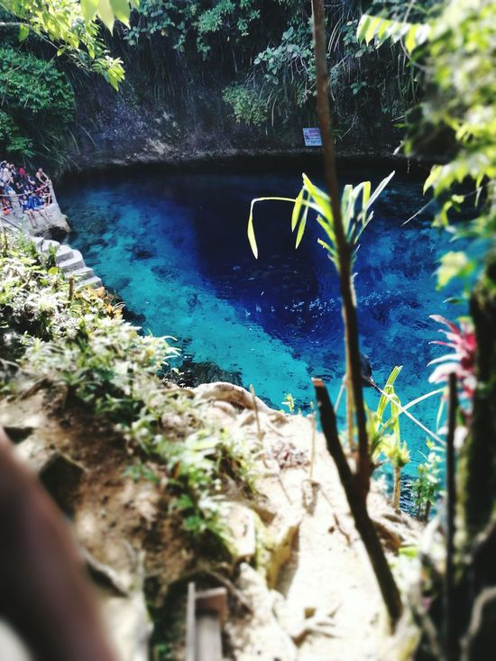 Water Nature Plant Tree Outdoors Beauty In Nature Scenics Summer Vacations Itsmorefuninthephilippines