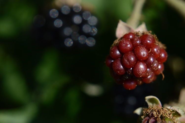 With my Nikon D3200 Red Fruit Nature Food Outdoors Nikon Nikon D3200 Brombeeren Früchte Nikonphotograhy Nikonphotographer Nikonphotography Focus On Details Makro Photo Makro Shot Beauty In Nature Macro Photography