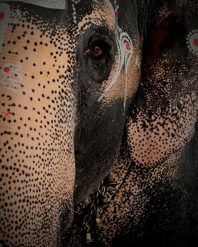 Indian Elephant Patterns & Textures Personal Favorite strength in the body devotional through eyes !