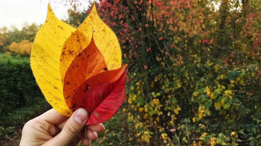 Autumn Leaves Fall Leaves Colors Colorful Real People Human Hand Holding Outdoors Nature