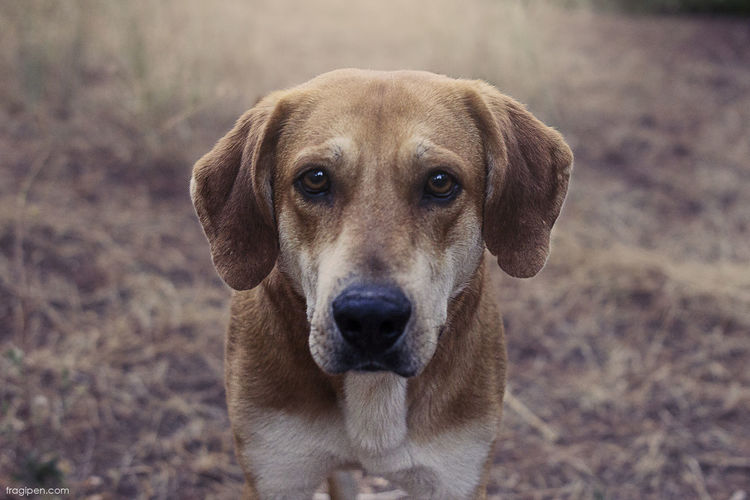 Animal Animal Themes Close-up Day Dog Dog Looks At Camera Focus On Foreground Look Nature Pets Portrait